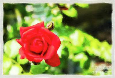 Mixed Media - The Red Rose Watercolor by Marina Usmanskaya