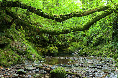 Photograph - The River Lyd In The Lydford Gorge Natural Reserve, Devon, Uk by Flavio Massari