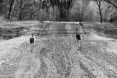 Photograph - The Road Is Long by Sheila Skogen