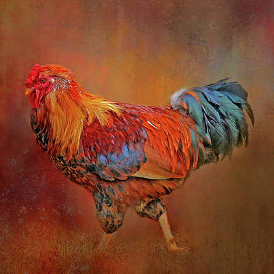 Photograph - The Rooster Strut by HH Photography of Florida