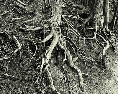 Photograph - The Roots Of Time by Jeffrey PERKINS