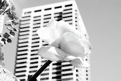 Photograph - The Rose And The City by Milena Ilieva