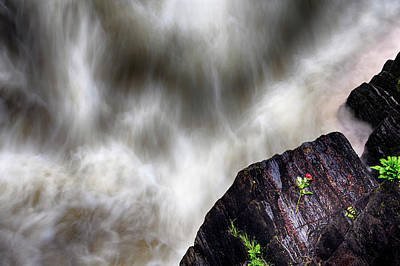 Photograph - The Rose Of Black Linn Falls - The Hermitage - Dunkeld Scotland by Jason Politte