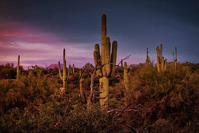 Photograph - The Saguaro Forest Sunset  by Saija Lehtonen
