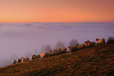 Photograph - The Sheep Of Saibi by Mikel Martinez de Osaba