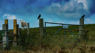 Photograph - The Sheep That Hates Dogs by Chris Lord