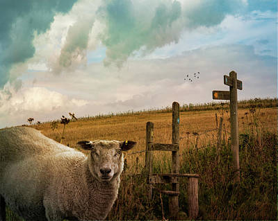 Photograph - The Sheep Who Knows Where She's Going by Chris Lord