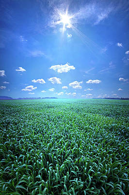 Photograph - The Simple Things In Nature Have A Message by Phil Koch