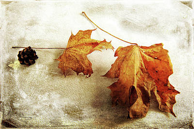 Photograph - The Sound Of Autumn by Randi Grace Nilsberg