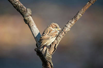 Photograph - The Sparrow by Cathy Kovarik