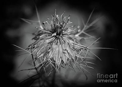 Photograph - The Structure Of Love In A Mist by Karen Adams