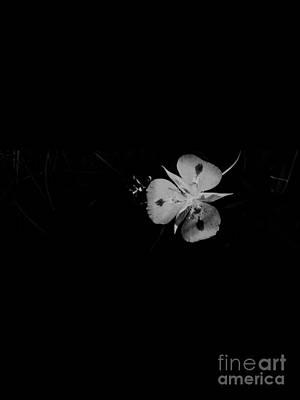 Photograph - The Summer Fairy by Jennifer Lake