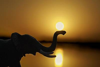 The Sun And Elephant Original