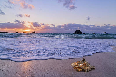 Beach Royalty-Free and Rights-Managed Images - The Sunrise Shell by Betsy Knapp