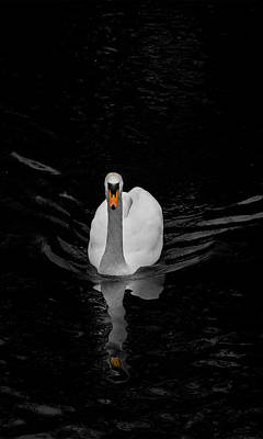 Photograph - The Swan by Alan Campbell