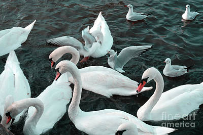 Photograph - The Swans And Seagulls by Marina Usmanskaya