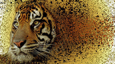 Photograph - The Tiger by Elie Wolf
