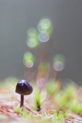 Photograph - The Tiny Toadstool by Karen Van Der Zijden