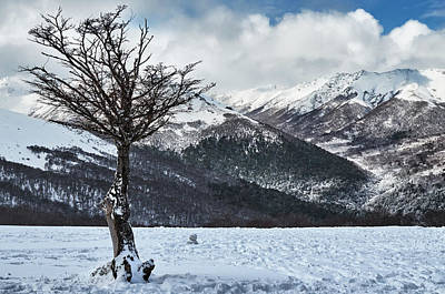 Photograph - The Tree And The Beautiful Snowy Paradise by Eduardo Jose Accorinti