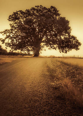 Photograph - The Tree At The End Of The Road by Don Schwartz