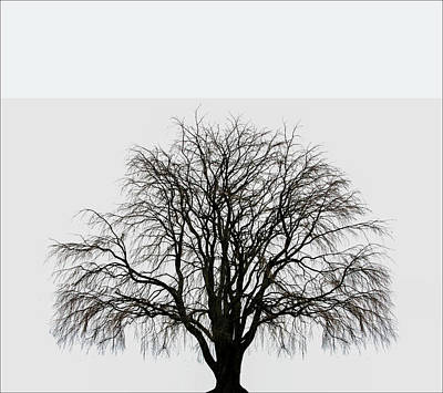 Art Print featuring the photograph The Tree By The Side Of The Road by Jim Dollar