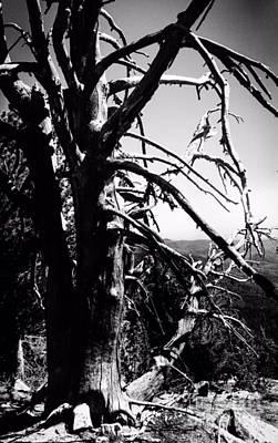 Photograph - The Tree Of Mt. Ireland by Jennifer Lake