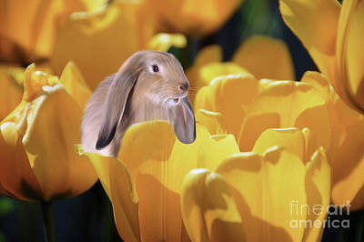 Photograph - The Tulip Patch by Elaine Manley