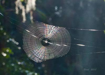 Photograph - The Web by Farol Tomson