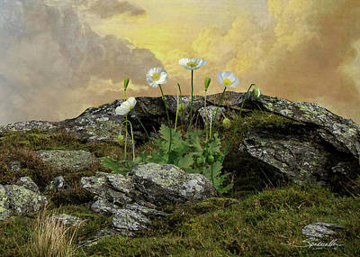 Digital Art - The White Poppies Of Peace by M Spadecaller