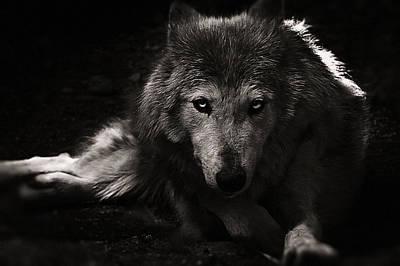 Photograph - The Wolf by Christine Sponchia