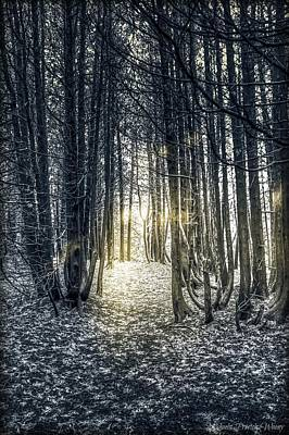 Photograph - The Woods by Michaela Preston