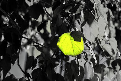 Photograph - The Yellow Heart Of The Tree by Joseph S Giacalone