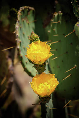 Photograph - The Yellow Rose Of Arizona by Rick Furmanek