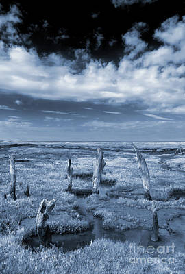 Royalty-Free and Rights-Managed Images - Thornham Stumps Cyanotype by John Edwards