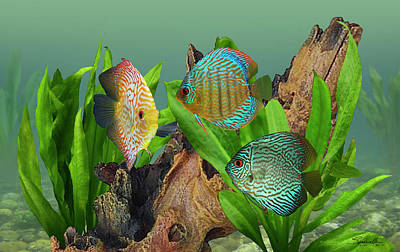 Digital Art - Three Discus Fish by M Spadecaller