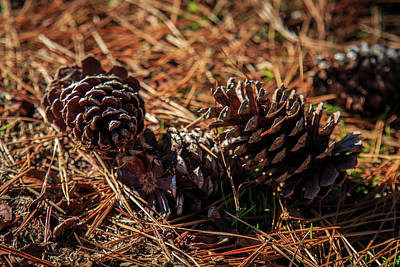 Photograph - Three Fallen Pine Cones by Doug Camara