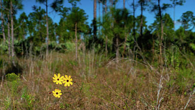 Photograph - Three Flowers Royal Palm Beach Pines Nature Area by Lawrence S Richardson Jr