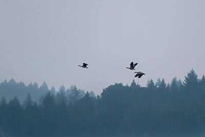 Photograph - Three Flying Geese by Jean Noren