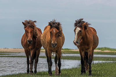 Photograph - Three Horses In A Row Looking by Dan Friend