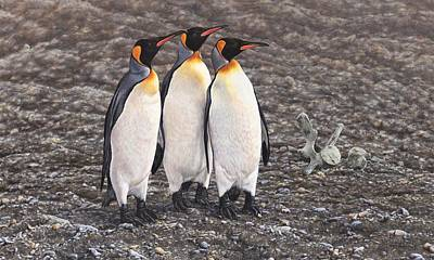 Painting - Three Kings - Penguin Portrait By Alan M Hunt by Alan M Hunt