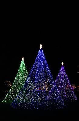 Photograph - Three Light Trees by Perggals - Stacey Turner