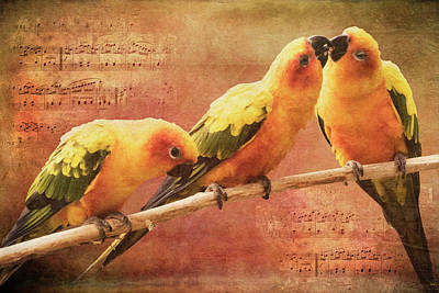Watercolor Pet Portraits Photograph - Three Parrots by Mihaela Pater
