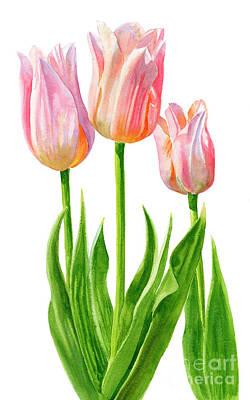 Three Peach Colored Tulips Original