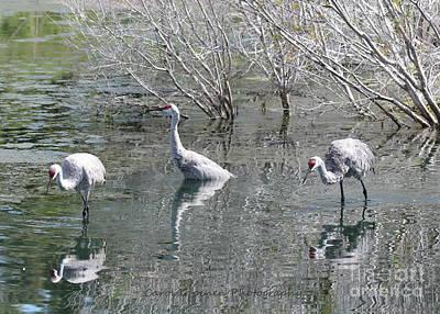 Photograph - Three Sandhills Through The Pond by Carol Groenen