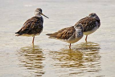 Photograph - Three Sandpipers by Susan Rydberg