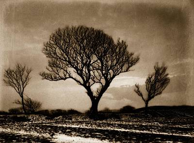 Art Prints Photograph - Three Trees by Frank Meadow Sutcliffe
