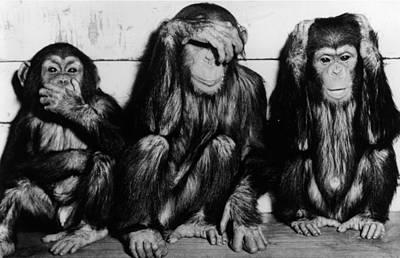Photograph - Three Wise Monkeys by Keystone