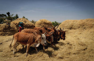 Photograph - Threshing by Uri Baruch