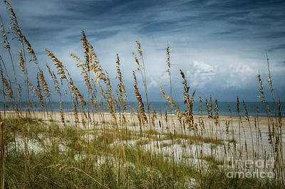 Photograph - Through The Sea Oats by Judy Hall-Folde