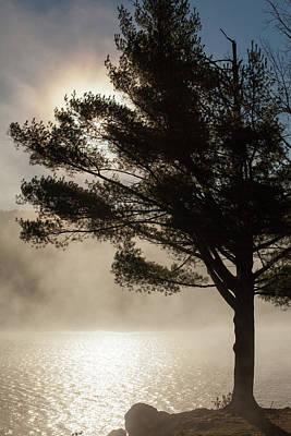 Photograph - Thru The Autumns Fog by Karol Livote